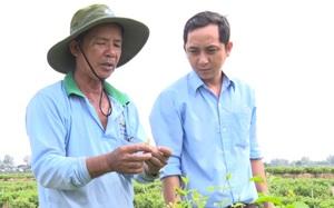 """An Giang: Ra đồng trồng loài hoa trắng như bạch ngọc, thơm """"nhức mũi"""", hái mỏi tay, bán đắt nhất là 300 ngàn/kg"""