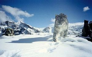 """Hành trình phiêu lưu tới Ladakh, """"săn"""" báo tuyết trên """"nóc nhà thế giới"""""""