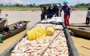 Đồng Nai: Vì sao gần 100 hộ nuôi cá bè lòng hồ Trị An chưa chịu di dời, tỉnh phải ra cảnh báo khẩn?