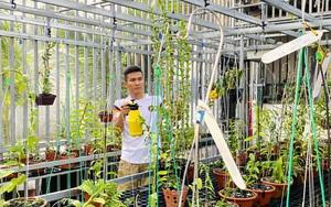 Bình Định: Thôi bôn ba về quê trồng lan phi điệp đột biến lại có tiền tỷ