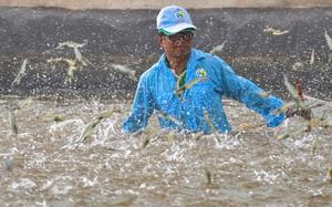 Mỹ, EU mở cửa trở lại sau khi dân được tiêm vaccine Covid-19, loài thủy sản này của Việt Nam bỗng nhiên hưởng lợi lớn