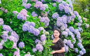 Lạng Sơn: Rực rỡ màu hoa này khiến du khách kìn kìn kéo đến