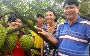 """Nhiều doanh nghiệp làm """"bà đỡ"""" thu mua trái cây mùa dịch Covid-19, xuất khẩu đều đều"""