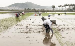 """Sơ kết vụ đông xuân phía Bắc: """"Nóng"""" chuyện tiêu thụ nông sản, ưu tiên """"luồng xanh"""" cho vải thiều"""