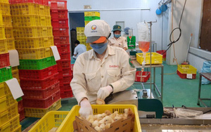 Dabaco chốt quyền trả cổ tức, ông Nguyễn Như So mua 10,5 triệu cổ phiếu DBC