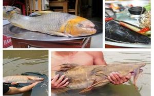 """5 loài cá cực hiếm được ví là """"ngũ quý hà thủy"""", có tiền chưa chắc đã mua được là những loại nào?"""