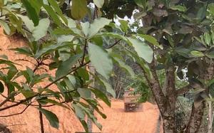 Huyện Na Rì (Bắc Kạn): Mở đường lên rừng, đổ đất lấp ruộng ngay gần UBND xã