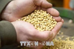 Xuất khẩu nông sản của Mỹ sang Trung Quốc dự kiến cao kỷ lục