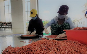 Đặc sản tôm khô Rạch Gốc của tỉnh Cà Mau được làm từ mấy loại tôm, loại tôm nào làm khô ngon nhất?