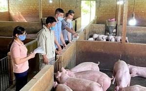 Tuyên Quang: Xử lý chất thải chăn nuôi lợn kiểu này, xử lý đến đâu sạch đến đó