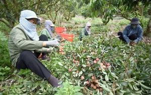 Hỗ trợ nông dân tìm đầu ra cho nông sản mùa dịch Covid-19