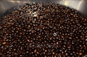 Thị trường nông sản tuần qua: Giá cà phê bật tăng mạnh trở lại, vượt 34.000 đồng/kg