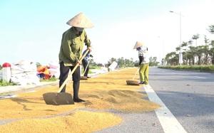 Hà Nội: Bất chấp nguy hiểm, người dân vẫn phơi thóc kín đường quốc lộ