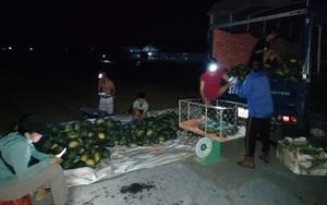 Nắng nóng đỉnh điểm: Nông dân Nghệ An thắp đèn thu hoạch dưa