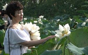 Đầm sen trắng Tam Hưng: Sắc trắng hút hồn du khách thập phương ngoại thành Hà Nội