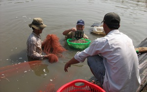 Long An: Lén nuôi con ưa nước mặn sinh tiền tỷ trên đất lúa, hàng loạt nông dân bị phạt