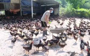 Bà Rịa - Vũng Tàu: Giá thức ăn chăn nuôi liên tục tăng cao, người chăn nuôi thua lỗ, không dám tái đàn
