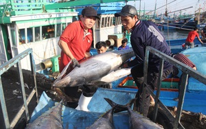 Mỹ, Nhật Bản ồ ạt thu gom, xuất khẩu nhiều loại thủy sản tăng 100%