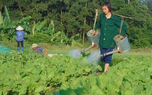 """Thái Nguyên: Các """"nhà"""" bàn giải pháp tháo gỡ khó khăn trong trong sản xuất, tiêu thụ nông sản"""