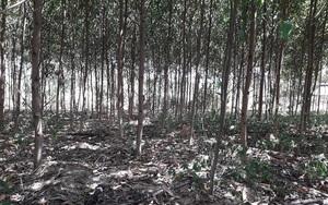 Đắk Nông: Phát hiện thi thể người đàn ông đang phân huỷ trong rừng cao su