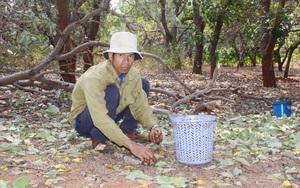 Nhập khẩu tới 1,4 triệu tấn khiến giá loại nông sản này của Việt Nam giảm sâu, dù được Mỹ mua nhiều