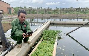 Gia Lai: Một nông dân đem loài ốc lạ về nuôi ở khu lò gạch bỏ hoang, ai ngờ nhiều người đòi đến xem