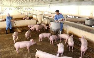 """Đầu tư mạnh chuyển đổi số, các """"đại gia"""" nông nghiệp thu lợi nhuận khủng"""