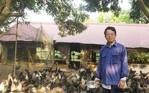 """Nông dân Quốc Oai rủ nhau nuôi những con vật này, mỗi năm """"đút túi"""" tiền tỷ là không khó"""