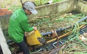 Đồng Tháp: Mô hình nuôi lươn to bự trong bồn xi măng cho thu nhập khá