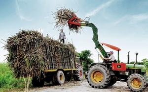 Thắng lợi bước đầu của mía đường Việt Nam trước sự tàn phá khủng khiếp của đường nhập giá rẻ