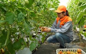Bắc Ninh: Giữa dịch Covid-19, nông nghiệp bật tăng 8,1% cao nhất trong nhiều năm, sản xuất công nghiệp đang hồi phục mạnh
