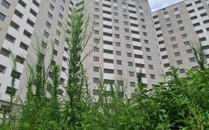 Xã hội hoá nhà tái định cư, có giải quyết được tình trạng 'xây xong bỏ hoang'?