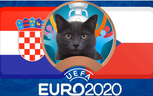 """Mèo """"tiên tri Cass"""" dự đoán tỷ số Croatia vs CH Czech"""
