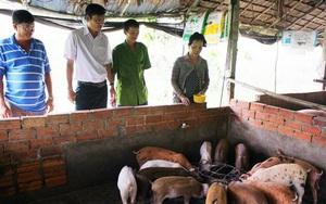 Vĩnh Long: Heo tộc là giống heo gì mà nông dân ở đây nuôi sau 2 tháng cứ bán 1 con lời 500.000 đồng?