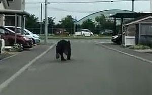 Clip: Khoảnh khắc kinh hoàng gấu hoang bất ngờ xuất hiện, 'lao như tên lửa' tấn công binh sĩ