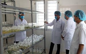Loài hoa lan rừng quý hiếm nào đang được tỉnh Lai Châu bảo tồn, nhân giống bằng phương pháp gì?