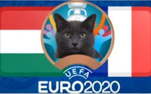 """Mèo """"tiên tri Cass"""" dự đoán tỷ số Pháp vs Hungary"""