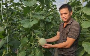 Làm cái chuyện không ai dám làm ở vùng cát nắng chang chang, ông nông dân chân đất Quảng Bình nay thành triệu phú