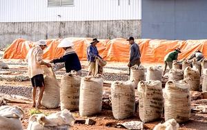 Việt Nam chi gần 1,9 tỷ USD nhập siêu hạt điều: Có phải là nghịch lý?