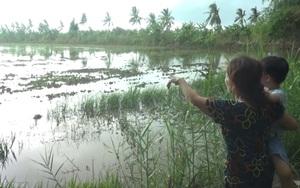 Cà Mau: Hàng ngàn hecta diện tích đất sản xuất nông nghiệp bị mất trắng do mưa lớn kéo dài