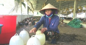 Nông dân ngậm ngùi nhìn gà Mía tăng trên 100.000 đồng/kg