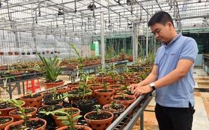 Đắk Lắk: Chàng trai trồng hoa lan giả hạc, có hoa lan giả hạc đột biến nhiều người kéo đến xem
