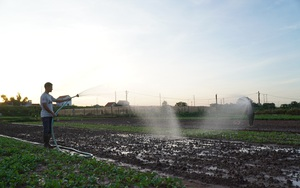 Hà Nội: Nông dân tưới rau từ tờ mờ sáng, tránh nắng nóng 40 độ C