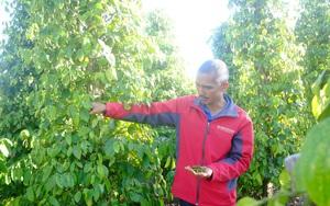 Chỉ làm việc này, giá một loại nông sản của Việt Nam đã tăng 44,6%, Mỹ - Trung Quốc đều thích mua