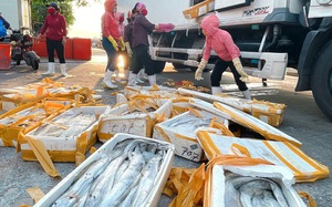 Quảng Bình: Đối tác Trung Quốc ngừng thu mua, loài cá đặc sản dài ngoẵng này bán rẻ mạt chưa từng thấy