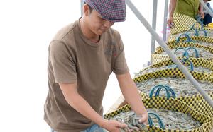 Mỹ, Nhật Bản, Trung Quốc, Hàn Quốc đồng loạt thu mua, loại nông sản này của Việt Nam rộng cửa thu 9 tỷ USD