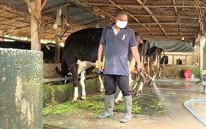 Bệnh viêm da nổi cục trâu bò xuất hiện ở Đồng Nai, nhiều tỉnh, thành phố phía Nam cảnh giác cao độ