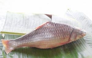 Loài cá cóc đặc sản ở miền Tây tên nghe xấu xí nhưng thực ra lại là mỹ ngư sông Hậu