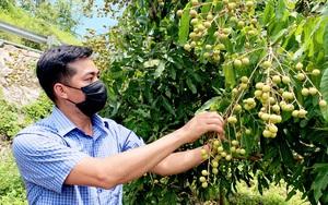 Lai Châu: Phát triển cây ăn quả có giá trị kinh tế cao để giảm nghèo bền vững