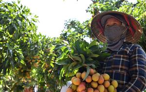 Lần đầu tiên: Nông dân Bắc Giang sẽ được hướng dẫn livestream, chốt đơn bán vải thiều